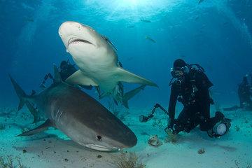 Драйвер заглянул в пасть акуле