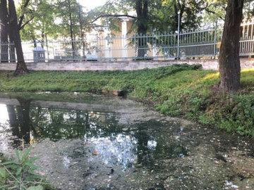 Петербуржцы пожаловались на гибель уток в прудах Таврического сада