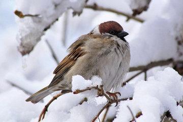 Московские птицы приуныли