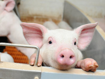 В Самарской области свинокомплекс обвинили в гибели рыбы в Тростянке