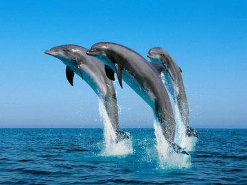 Власти Индии признали дельфинов личностями