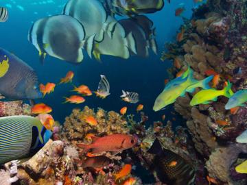 Массовый вылов заставил рыб эволюционировать быстрее