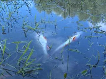 В МЧС Башкирии подтвердили массовую гибель рыбы на озере
