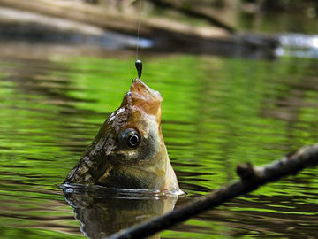 Советы рыболову, которые не оставят без улова