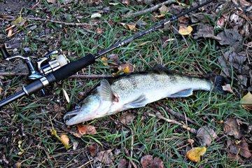 Осень. Рыбалка. Трофейная щука