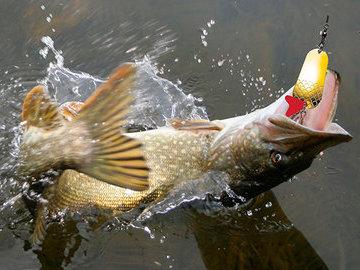 Ловля рыбы самодуром