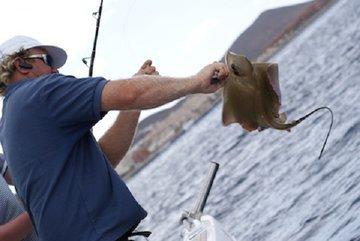 Охота на скатов: особенности экзотической рыбалки