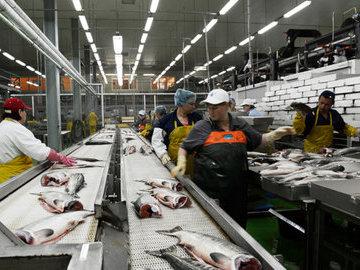 В Петербурге на каждом втором рыбном предприятии выявили нарушения
