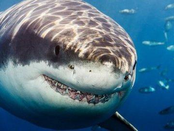 Топ-5 самых больших рыб в океане