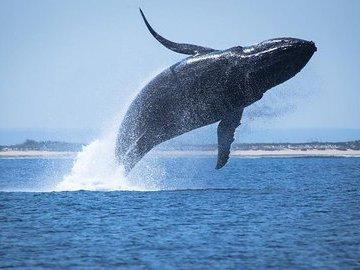 Рыбак запрыгнул на спину метущегося кита, чтобы спасти его жизнь