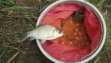 Самые эффективные прикормок для рыб