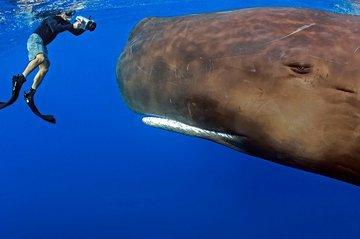 Удивительное чудо морского мира. Кашалот