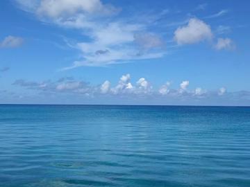 """Атлантический океан начинает """"цвести"""" из-за загрязнения воды"""