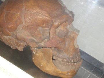 "Открытие: у неандертальцев часто встречалось ""ухо пловца"""