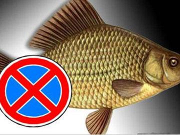 Какую рыбу нельзя употреблять человеку
