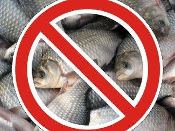 Несколько видов популярной рыбы, которую нельзя есть вообще