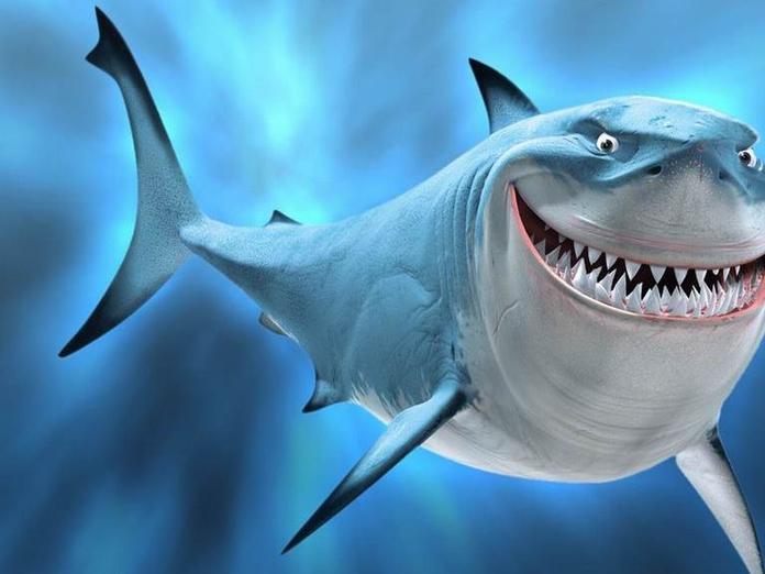 акулы злой акулы картинки этих собак при