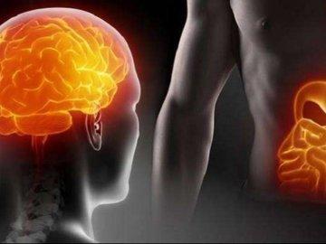 Бактерии из кишечника могут переселяться в мозг