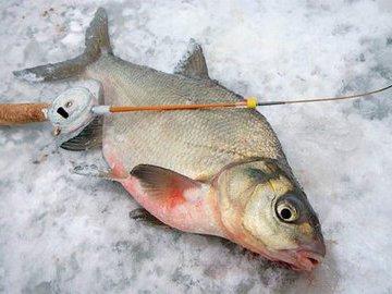 Зимняя поплавочная рыбалка.