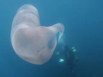 Возле Уайт-Айленда нашли загадочное существо
