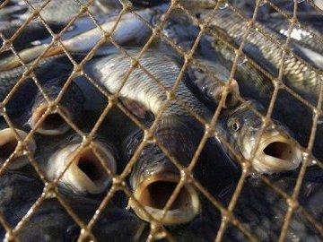 Помогите бороться с незаконной рыбалкой с Global Fishing Watch
