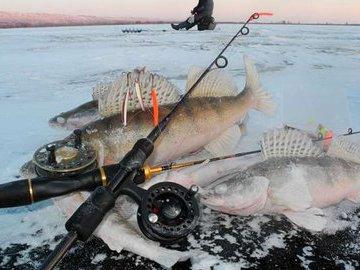 Ловим зимнего судака на бокоплавы