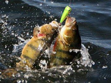 Какую рыбу можно половить в апреле