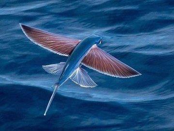 Интересное о рыбах