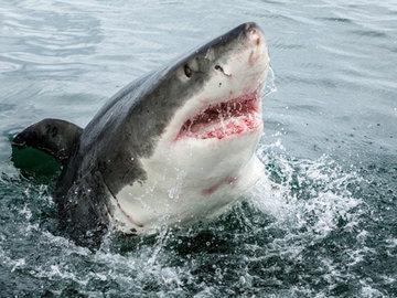 Подводный беспилотник нашел «невероятный» питомник акул у берегов Ирландии