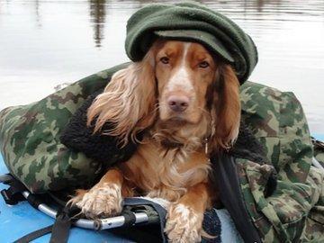 Собака для рыбака