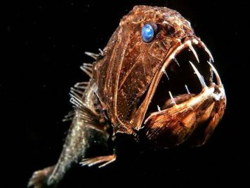 Ученые изучают морских обитателей глубоководных впадин