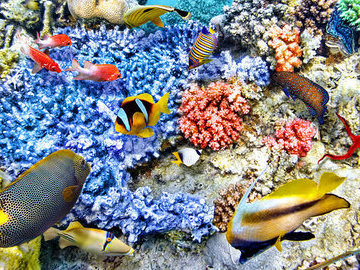 Кораллы растут там, где писают рыбы