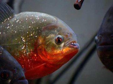 Блиц о самых, самых рыбах