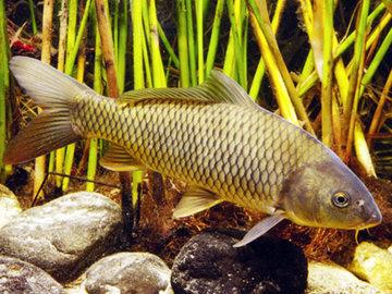 Инфекционные болезни, которыми болеют рыбы
