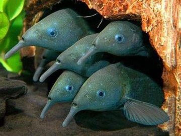 Какие рыбы развили электрические силы в ходе эволюции