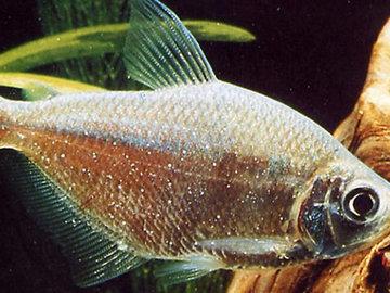 Некоторые виды инвазионных болезней рыб