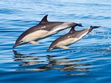 Морские ангелы-хранители людей - дельфины