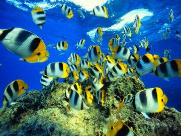 Океанологи примут участие в разработке новых методов лечения онкологии